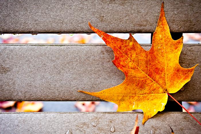 Park Bench Leaf