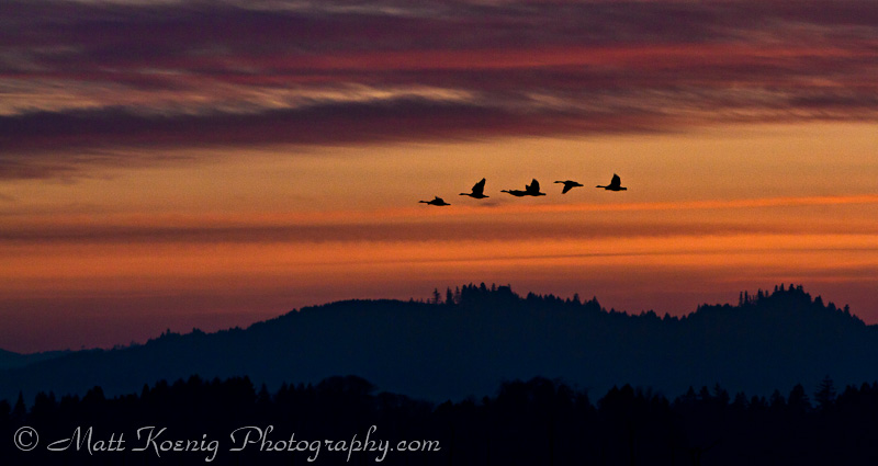 Flying Geese in Silhouette