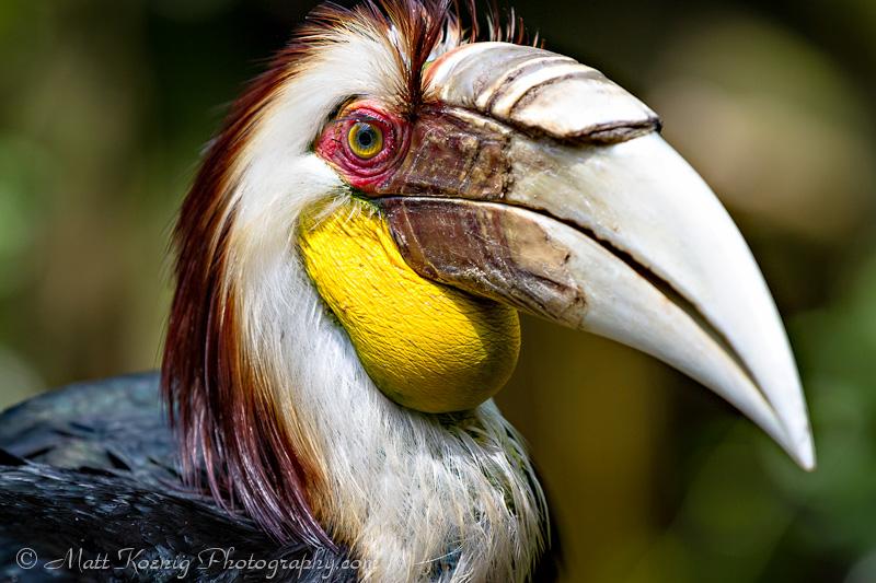 Taman Safari Bogor Indonesia