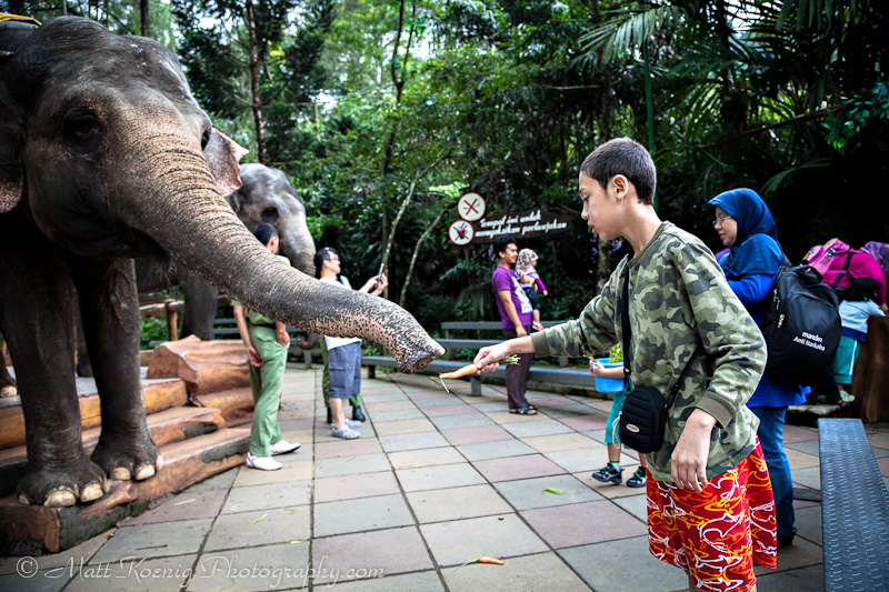 My son feeding the elephants