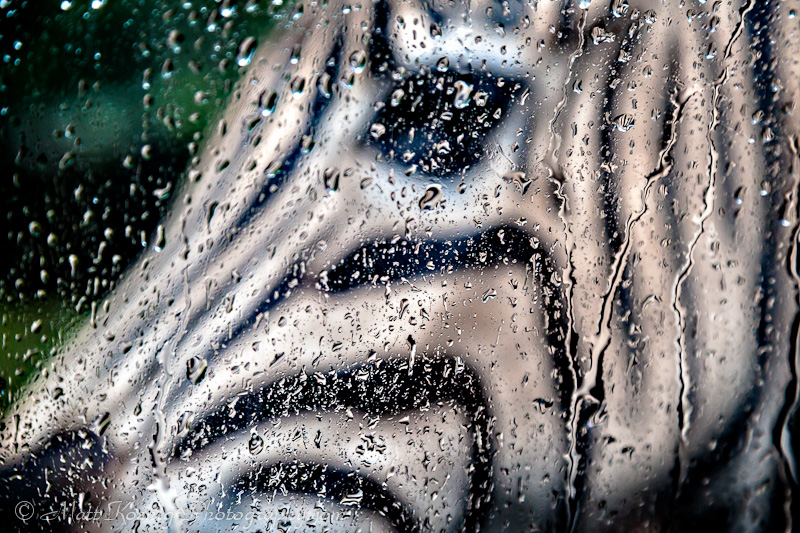 Zebra through a rain splashed window at Taman Safari Bogor Indonesia