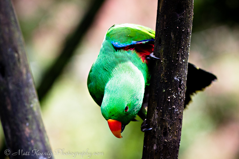 Colorful bird at Taman Safari Bogor Indonesia