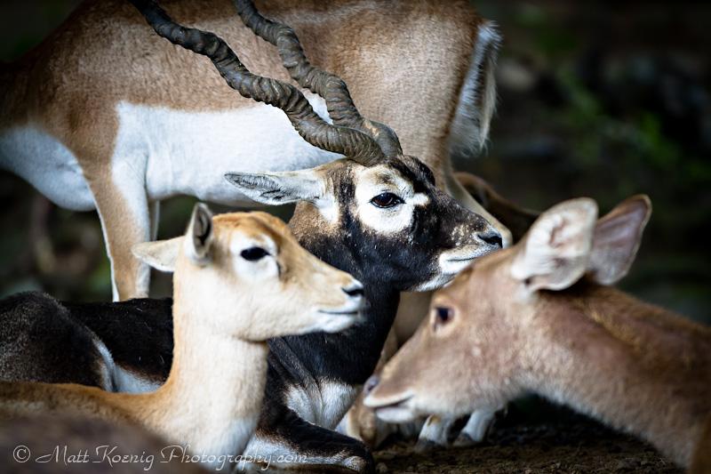 Taman Safari - Bogor Indonesia