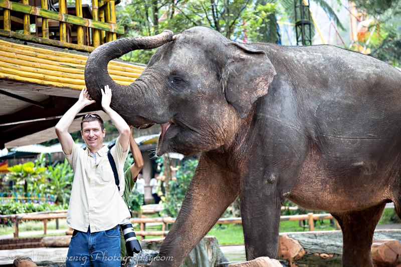 Elephant - Taman Safari Bogor Indonesia