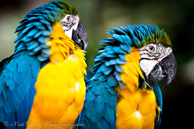 Colorful birds at Taman Safari in Bogor Indonesia